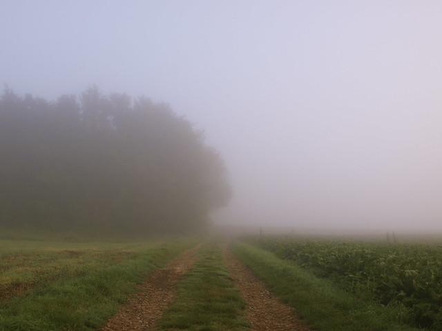 Nebliger Tagesbeginn - Misty morning