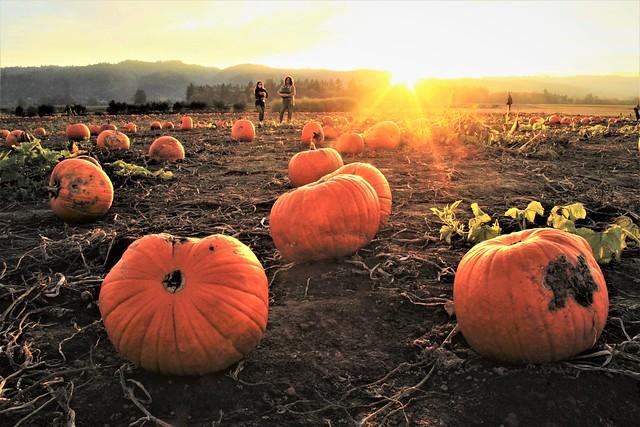 Setting light on Pumpkins