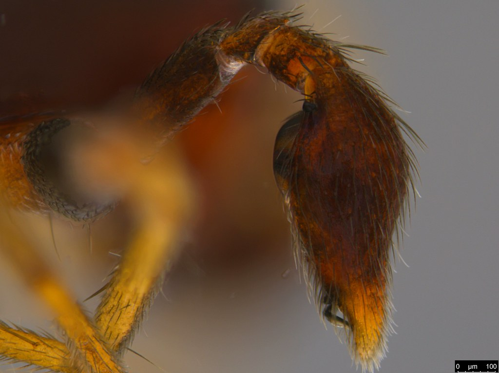 3d - Araneae sp.