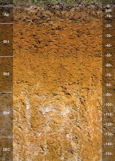 Zanesville soil series