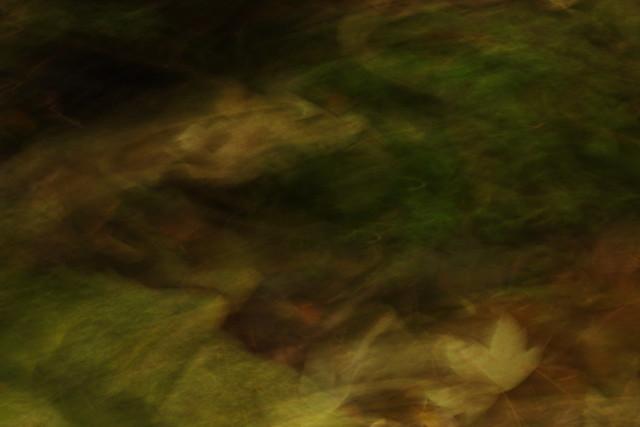 moss and leaf_ICM