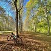 #bike #velo #bois #forest #chateaudeversailles #parcversailles #balade #leaf #automne #autumn