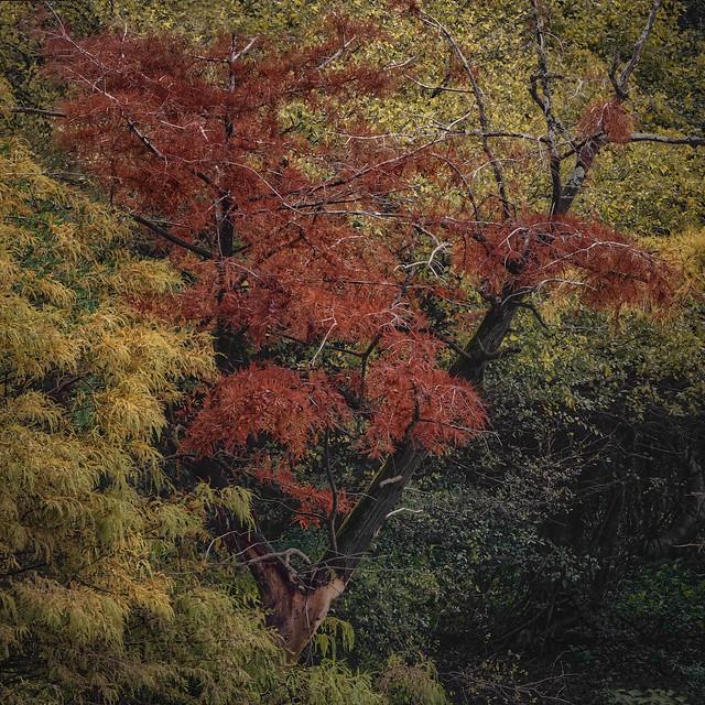 90D3795 Them Autumn Leaves