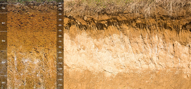 Zanesville soil series and soil pit