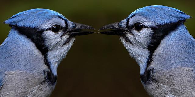 Resize 2-up - Beak to Beak