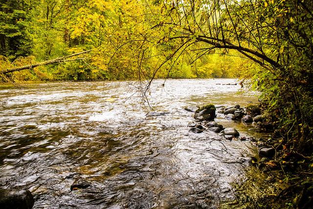 Autumn Colors Along The Tolt River