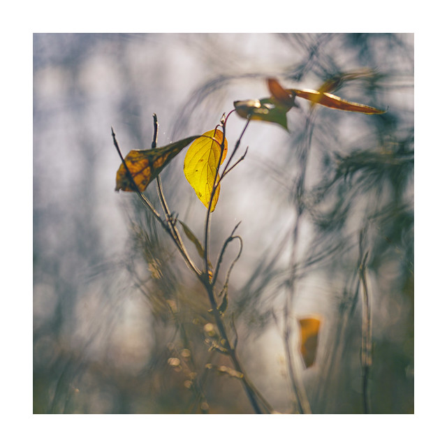 ... yellowish grey ...(Explored)