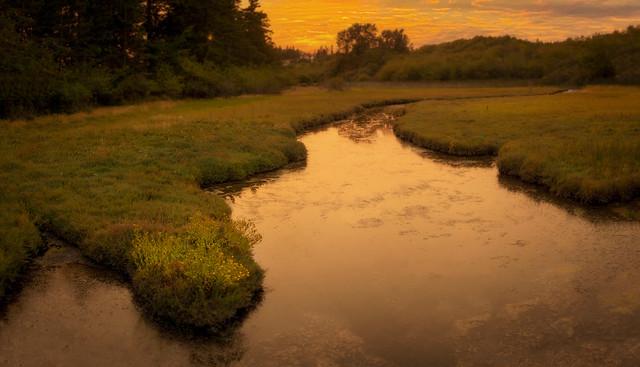 Wetland on Lummi Island, Washington