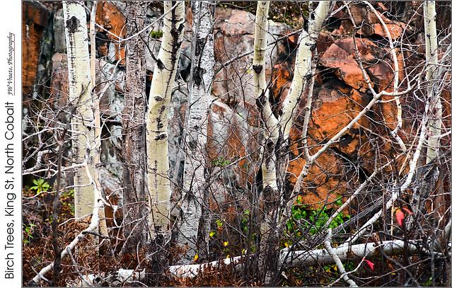 Birch Trees, King St, North Cobalt