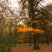 Golden autumn in the old park. Moscow Russia by Laperuz
