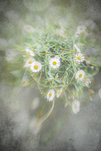 Daisy, daisy....