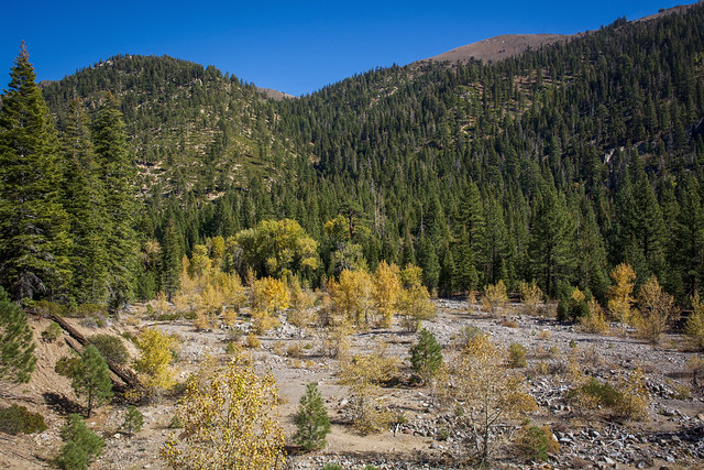 Wolf Creek.