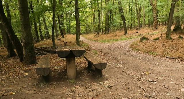 021Oct 08: Autumn Forest Rest