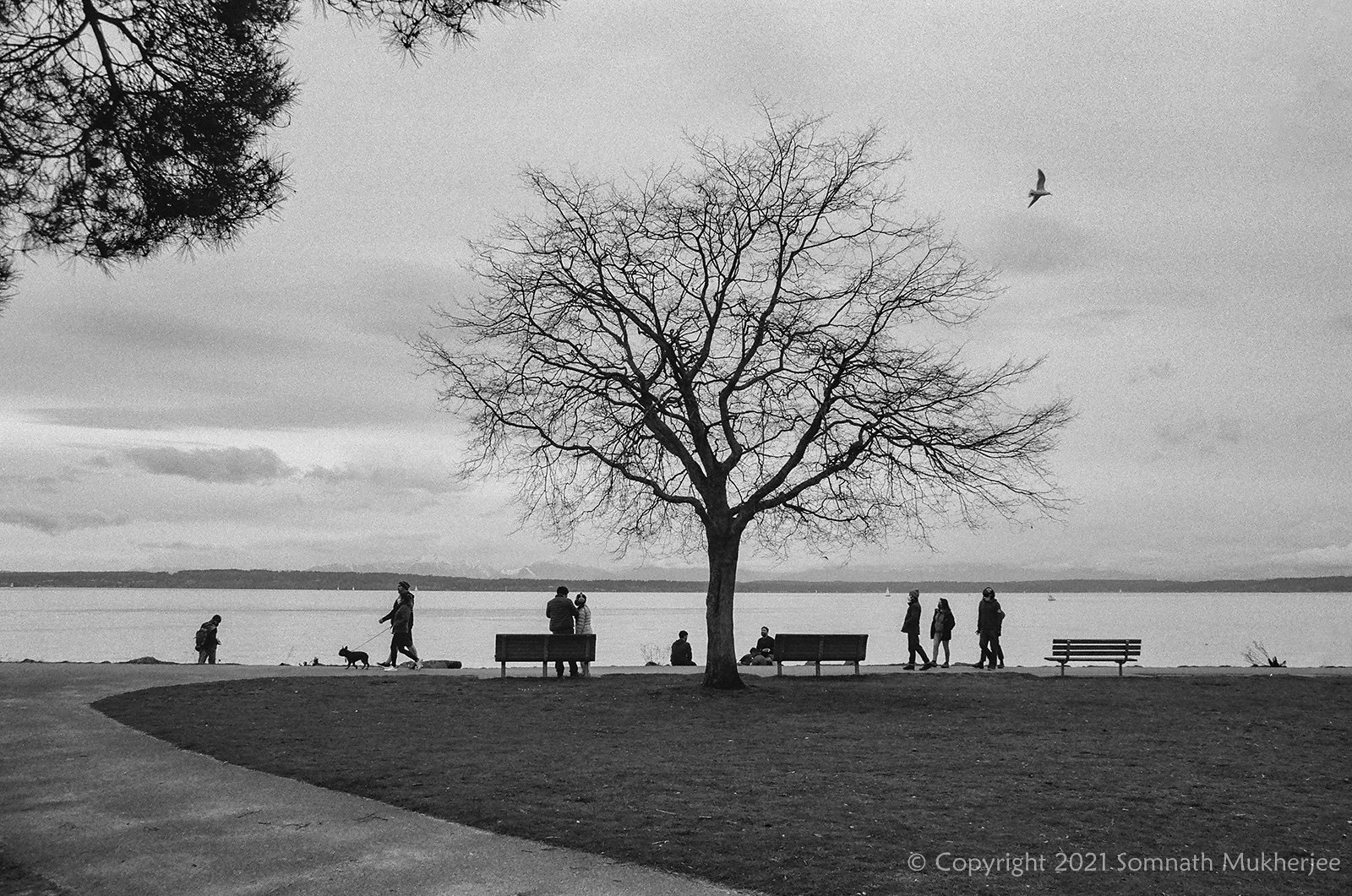 A lazy evening | Golden Gardens Park, Seattle, WA | February, 2021 by Somnath Mukherjee Photoghaphy
