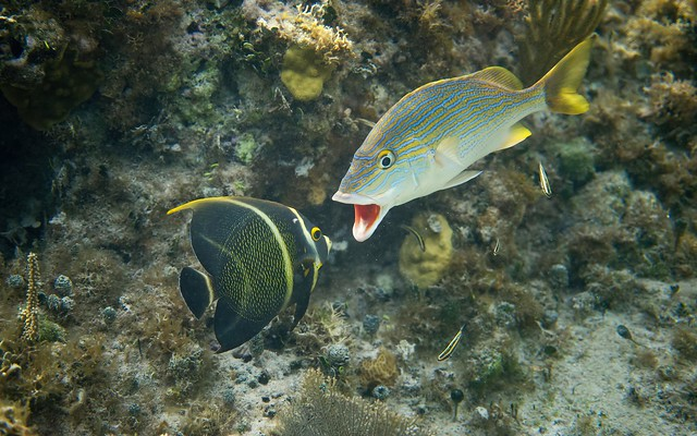 Conflict on the reef