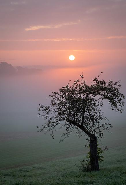 Sonnenaufgang im Nebel (IV) / Sunrise in The Fog (IV)