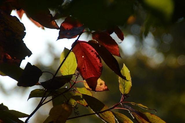 DSC_0220 Blätter gezoomt