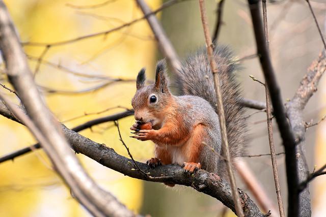 Squirrel s