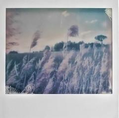 Navaseca en Polaroid 3