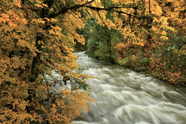Fall on the Sol Duc River