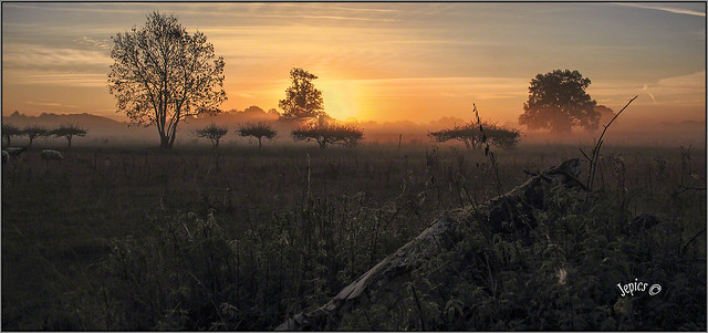 A Morning With Mist..