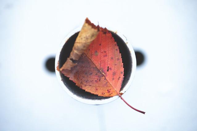 pick up the autumn - jeux d'autumn