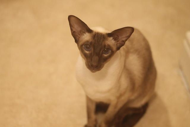 Looking after the last kitties in Neston!