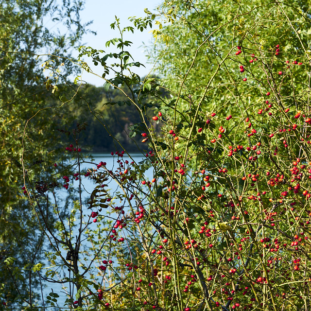 Herbst am Baggersee