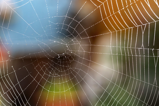 Spider's Web (Explored - 17 Oct 21)