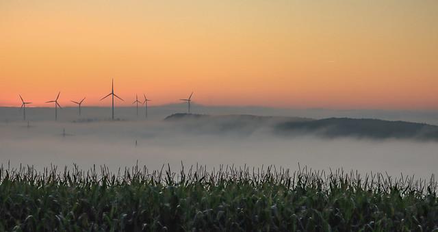 Wunderschöner nebliger Oktobermorgen in der Eifel.