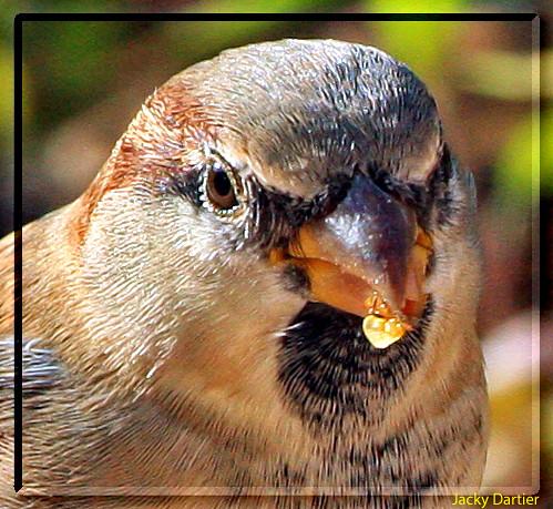 Portrait d oiseau