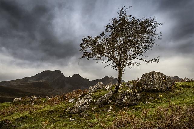 A Tree Grows in Torrin