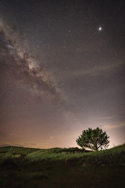 Jupiter and the tree