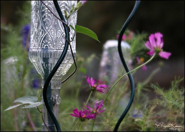 From My Garden...