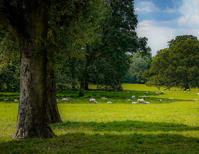 Sheep may safely graze....