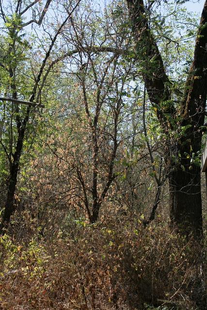 Riparian Woods September
