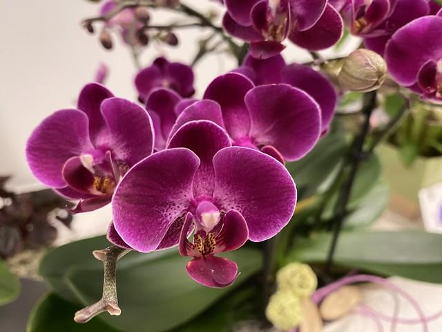 365/290 2021-10-17 Orchidee