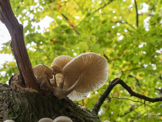 Slimy Mushroom, Silkeborg 2021