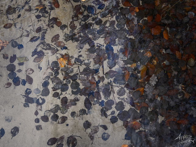 Leaves, Just under the Surface, Silkeborg 2021