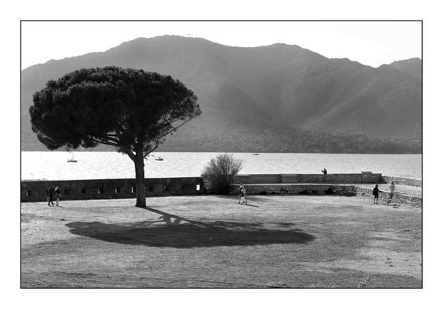 The tree at the Citadel