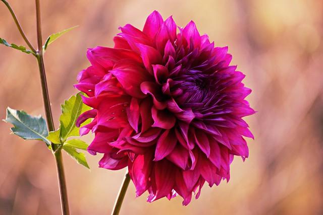 Focused on Flowers #19