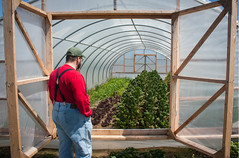 Danny inspecting greenhouse crops