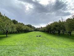 Green grass in mid October, Brooklyn Botanic Garden, NY