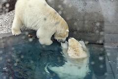 Aquarium Quu00e9bec