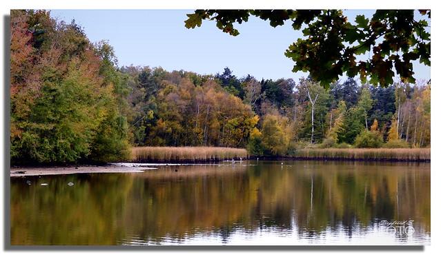 (in Explore) Herbst am Filzteich bei Wolfersgrün in Sachsen *Autumn at the felt pond near Wolfersgrün in Saxony