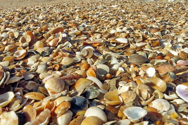 She sells sea-shells in the sea shore
