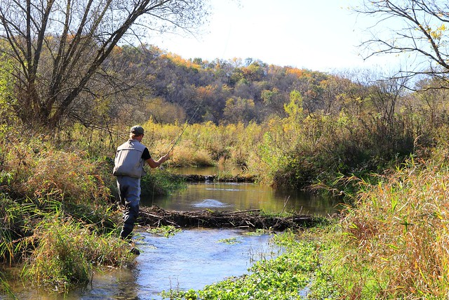 brook trout fly fishing in the Driftless Region IA 653A8056