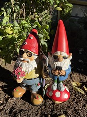 Mikey Mushroom & Studley P. Hungwell