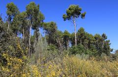 Vegetation near the Embalse de Cubillas, Granada