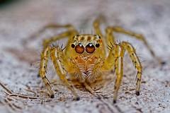 Spiders ufe0f